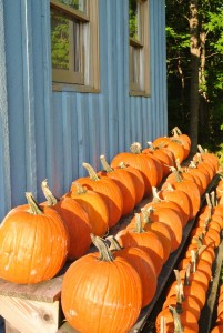 New Hampshire Pumpkin Patch