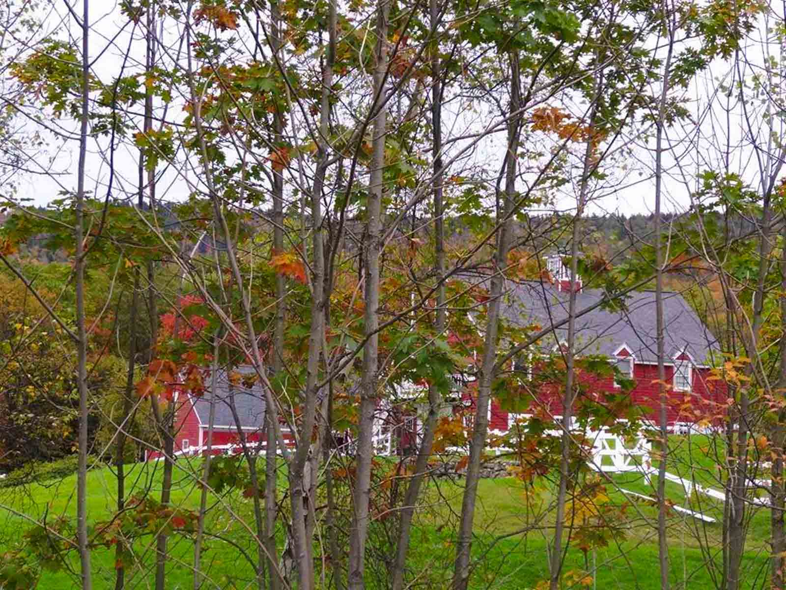 Stone Brook Hill Farm NH