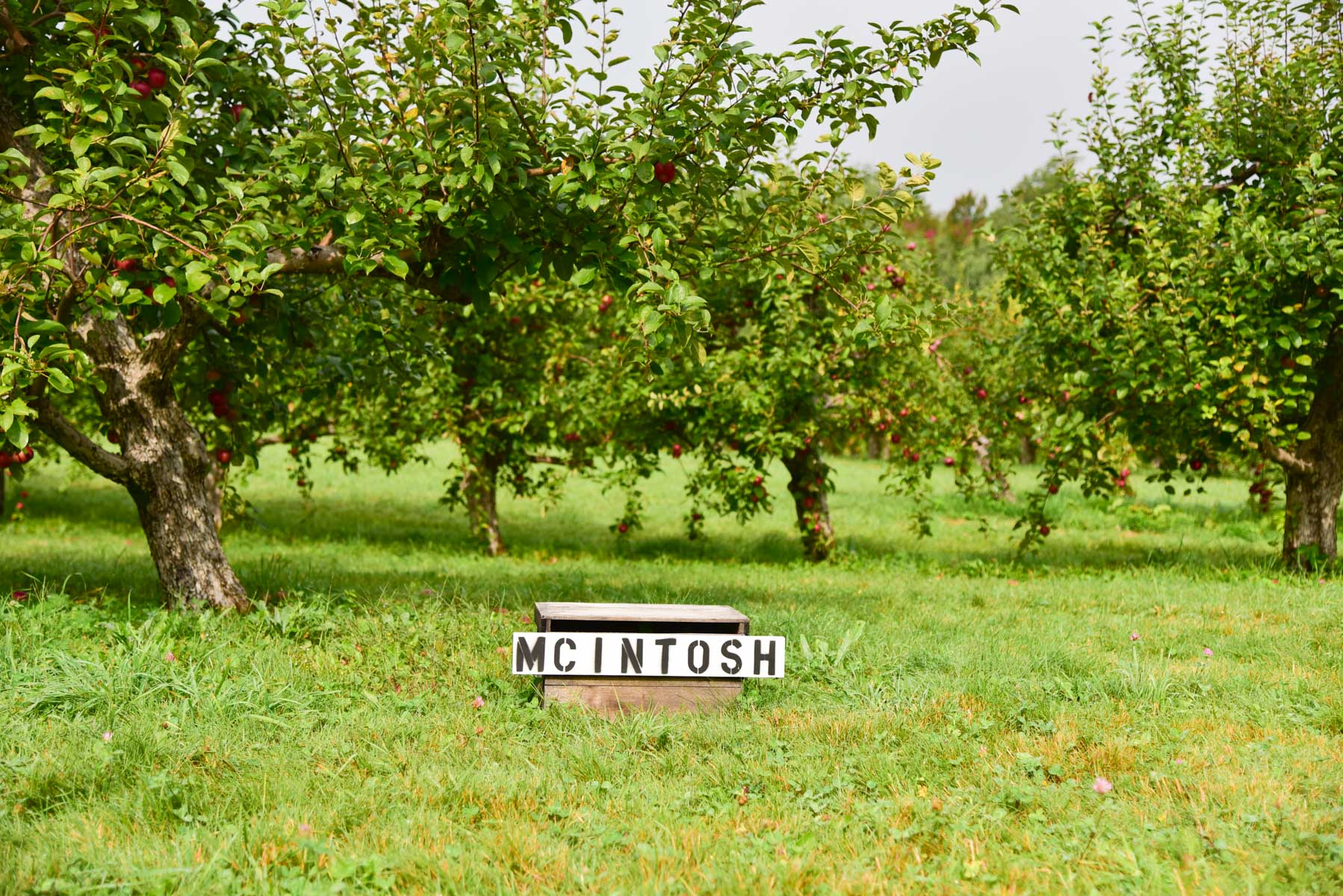 Apple Picking Nh 7