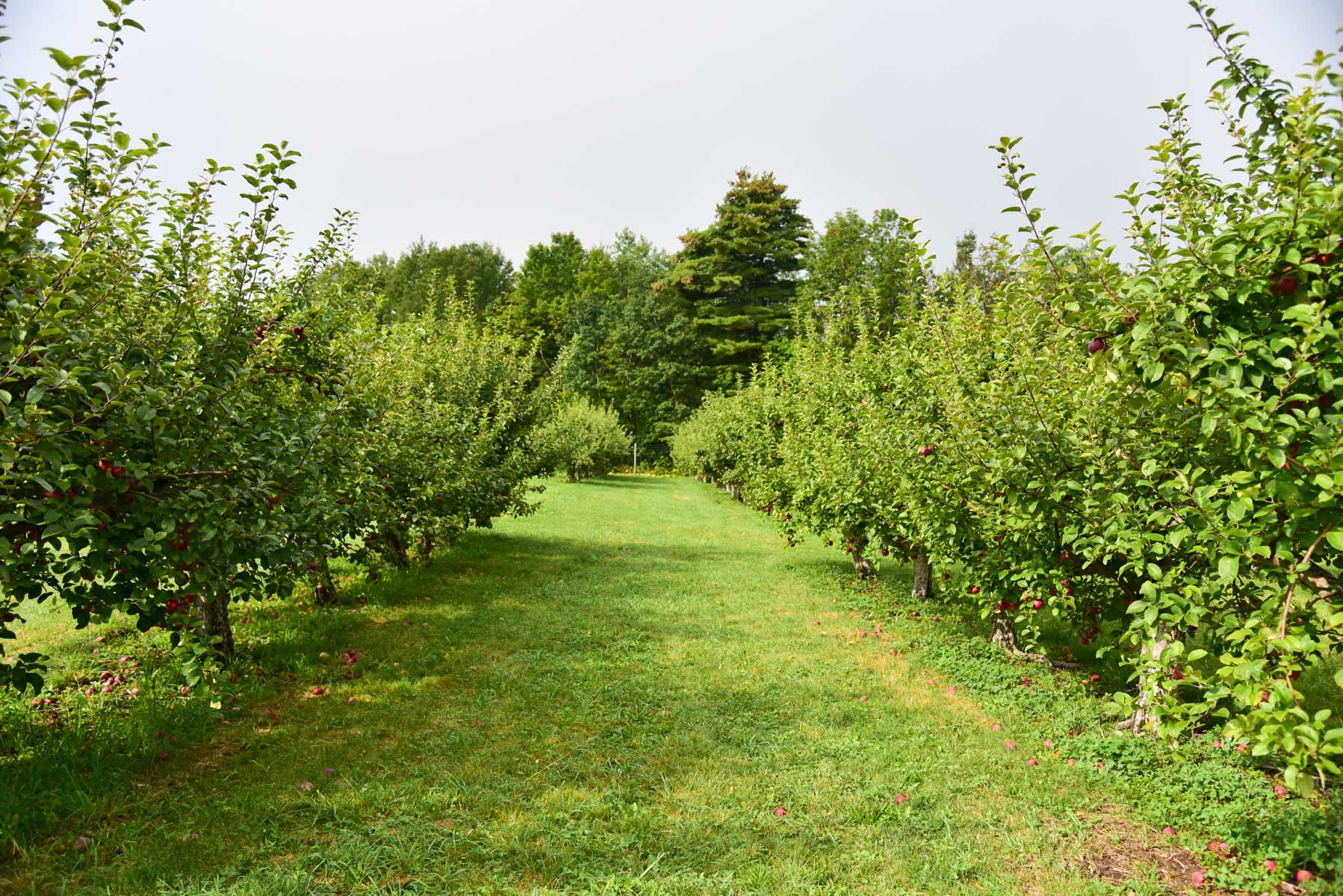 Apple Picking Nh 9